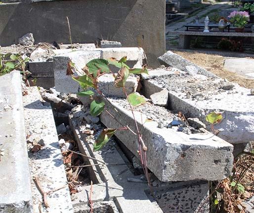 Krzyże przy śmietniku, pies między grobami