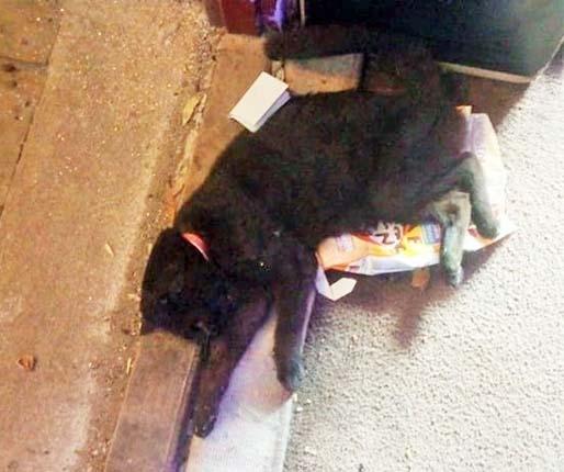 Skandal! Zostawiła zwierzę bez opieki. Kot zdechł z głodu.