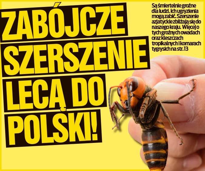 ZABÓJCZE SZERSZENIE LECĄ DO POLSKI!