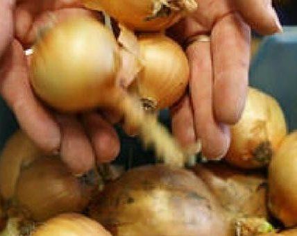 kradzież cebuli