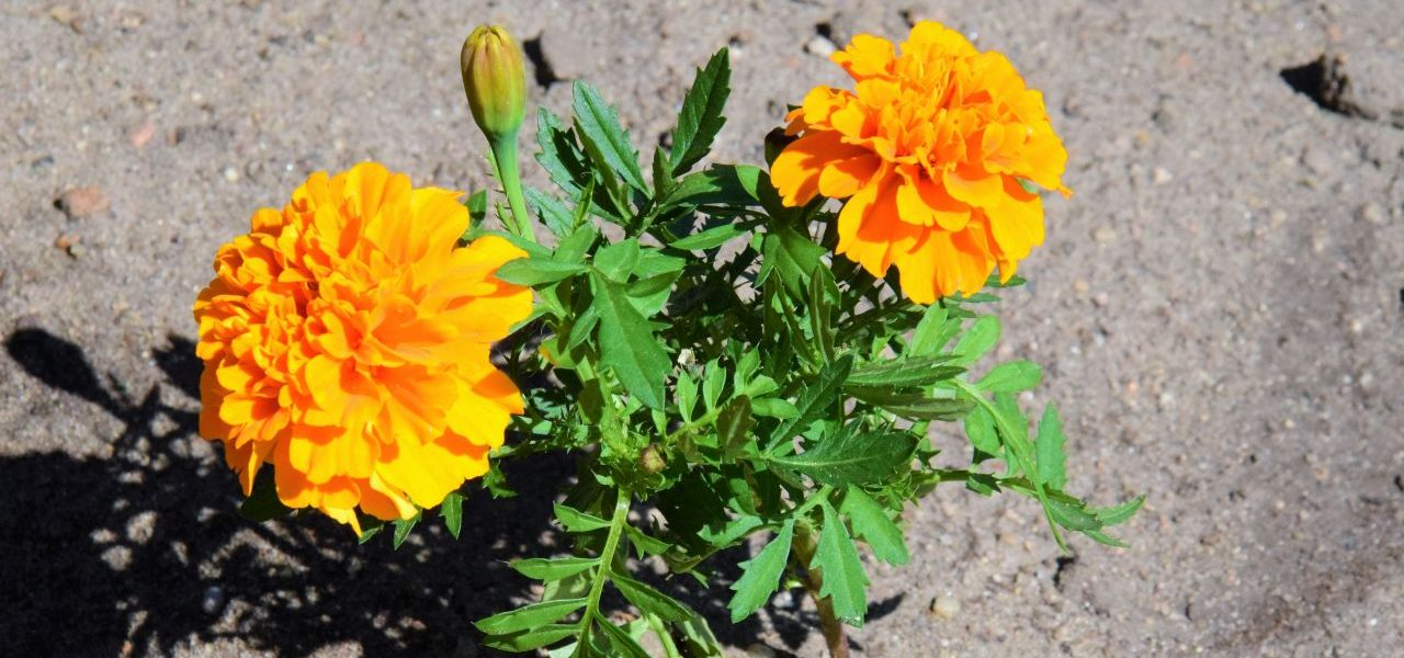 kwiatki łęczyca