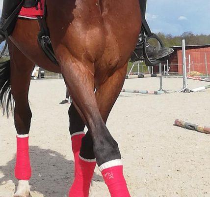 koń stratował 21-latkę