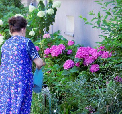 konflikt o kwiatki