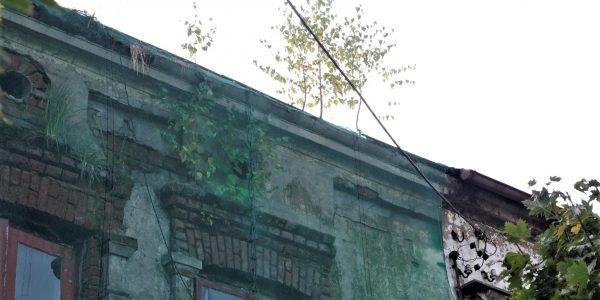 drzewa na kamienicy