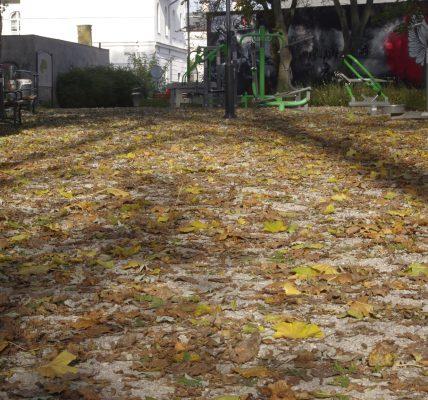 liście w parku