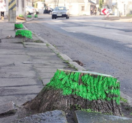 pniaki na zielono