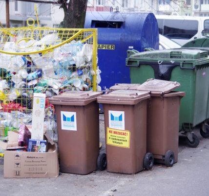 jedzenie w śmietnikach