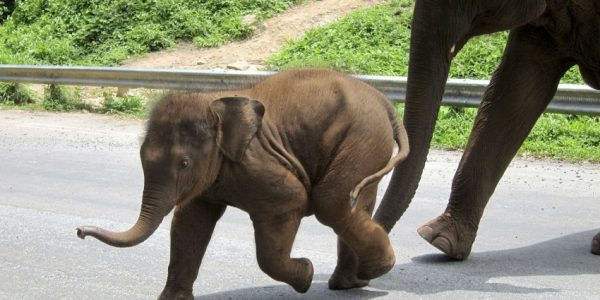 na ratunek słoniowi