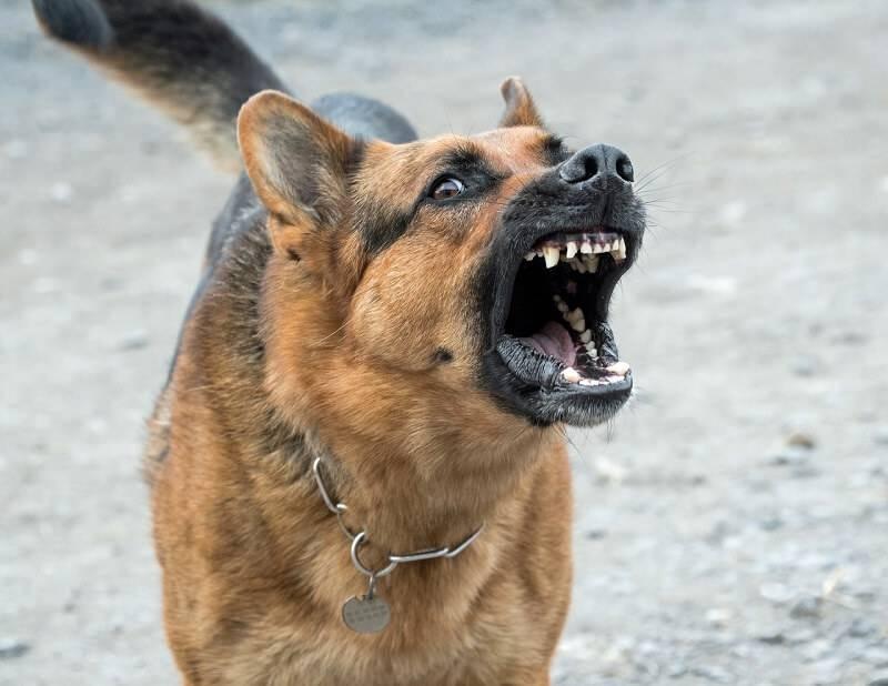 agresywny pies ozorków