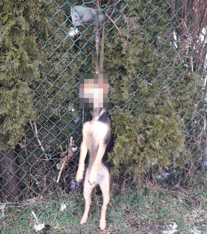 powieszony pies w łęczycy