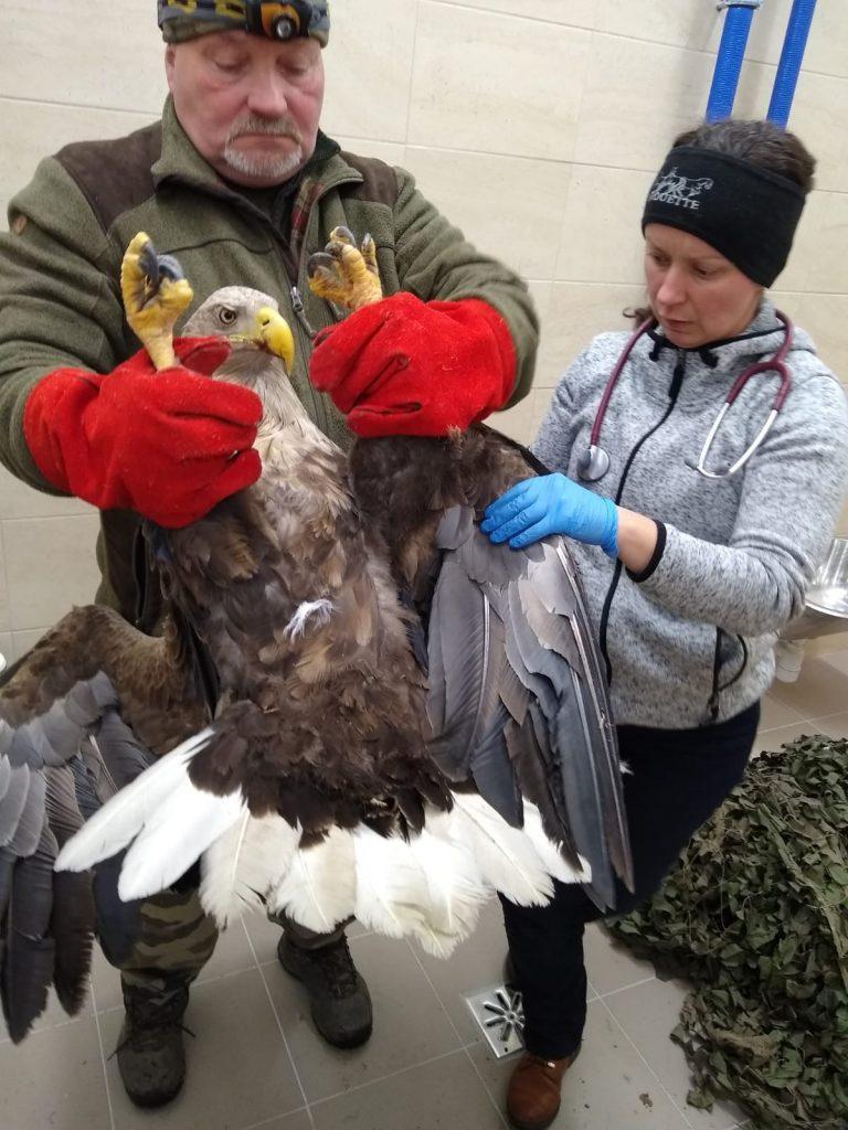 ratowali orła