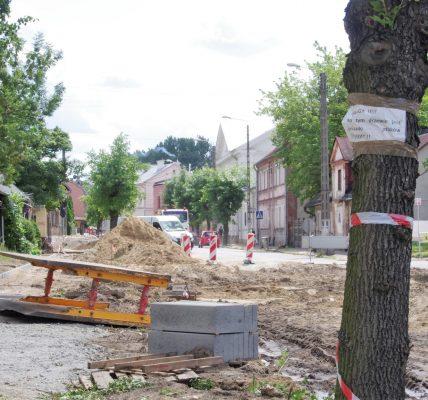 wycinane drzewa ozorków