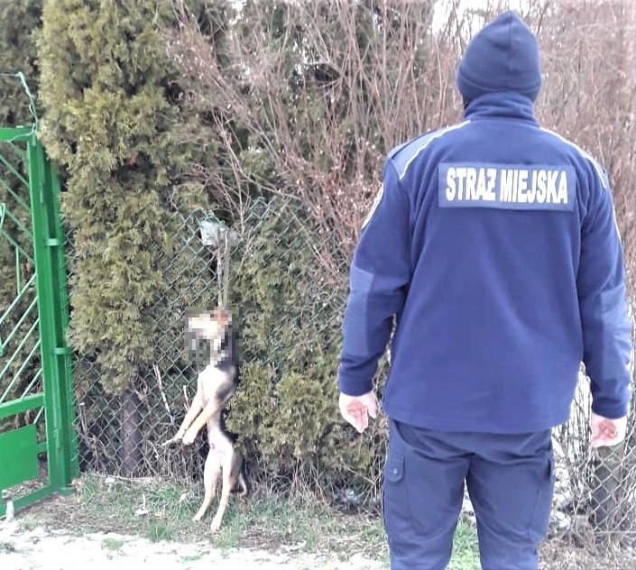 powiesił psa