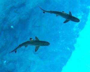 rekiny zoo